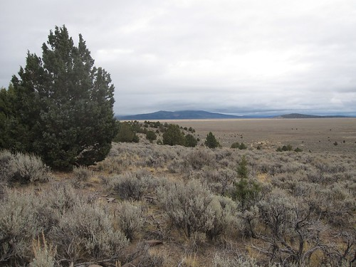 Property near Susanville