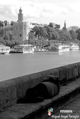 La vida ( Peragn ) Tags: del sevilla agua torre oro pobreza