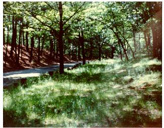 Horn Pond, Woburn, about 1985