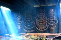 Prestige Symbol (Montañosa mon Amour) Tags: mountain philippines culture ritual horn tribe cordillera indigenouspeople carabao igorot indigena abigfave sadanga