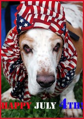 Happy 4th of July! (komissarov_a) Tags: blue red usa dog pet white holiday color art colors fashion animal oregon america fun happy outfit nikon downtown day serious fireworks stripes relaxing 4th july celebration card friendly masquerade independence rgb protector corvallis 2007 d80 pointyfaceddog theamerica theamericaamerica