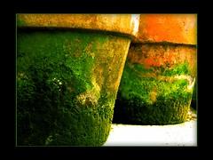 Beneath the Beautiful Flowers (Soul101) Tags: orange moss pots clay peopleschoice blueribbonwinner aplusphoto superhearts soul101