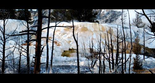 yellowstone- mammoth hot springs