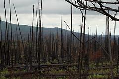 Caribou Hills Fire