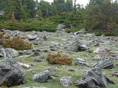 dscf4023.jpg (mbeldyk) Tags: marmot treeline rockymountainnationalpark twinsisterspeak