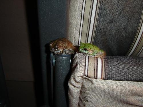 Frog & Toad's Excellent Adventure.