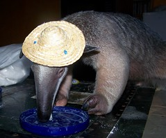 Stewie sombrero