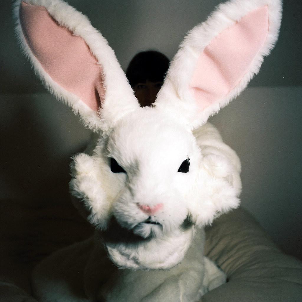 Фото злой кролик
