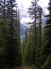Trees (jensouthern) Tags: valley larch