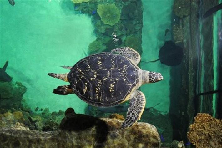 110310_aquarium01