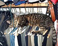 Cat in hangers