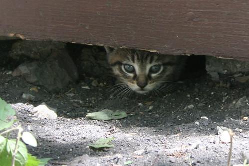 stray kitten!