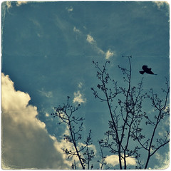 (scottintheway) Tags: sky tree bird texture clouds photoshop paper square cs2 antique grunge minimal age crop brushes plus fold rounded corners 500x500