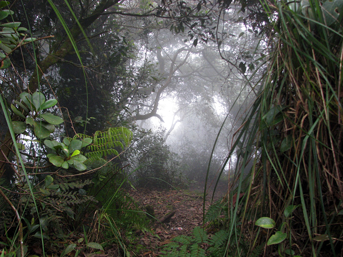 nuang10