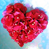 In Love (a m photography) Tags: flowers flower love us petals heart bougainvillea flowersonblue