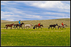 After Big Race... (mngl) Tags: horse kids nikon mongolia d200 ulaanbaatar horserace naadam nikond200 sigma70200mm mngl soyolon holidaysvancanzeurlaub edorj erhemchuhal erkhemchukhal erkhemchukhaldorj thatsclassy erhemchuhaldorj photofaceoffwinner huidoloo huidoloohudag naadam2007 pfosilver