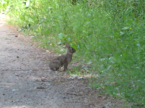 bunny in owsego