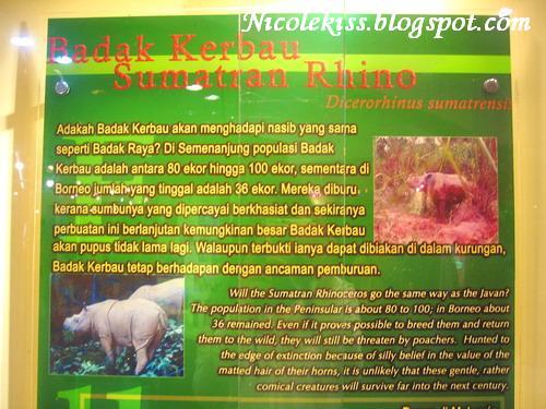 sumatran rhino description