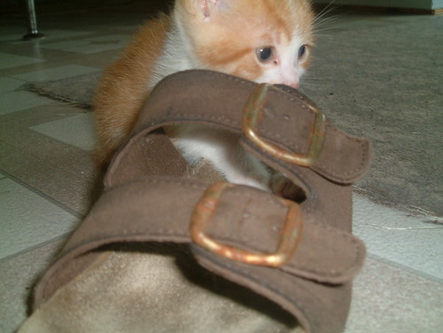 Kitten and Sandle