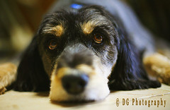The Blues (Deja Vu Photography (debbieskids)) Tags: mandy dog college eyes sad blues hamster canon5d superhearts