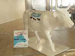 Airport Cow