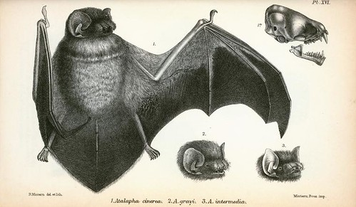 Animal Bat full body 3