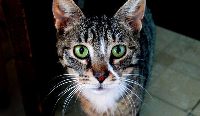 Need a name for an abandoned survivor cat - catname rescue