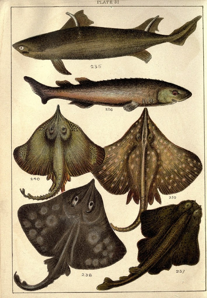 Our country's fishes and how to know them - a guide to all the fishes of Great Britain WJ Gordon 1902 k