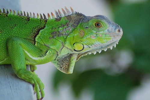 Then he wondered how this lizard survived for 10 years! Without moving a single step--since its foot was Nailed!