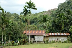 Village view in Borneo (Bornean) Tags: fauna flora village borneo tropicalrainforest localcommunities