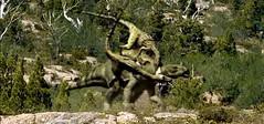 utahraptors chasing an iguanodon