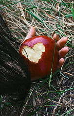 The Sleeping Death Sessions (4) (boopsie.daisy) Tags: sleeping red apple fairytale hair death hand heart fingers spell bite poison snowwhite blackhair poisoned lockofhair abigfave
