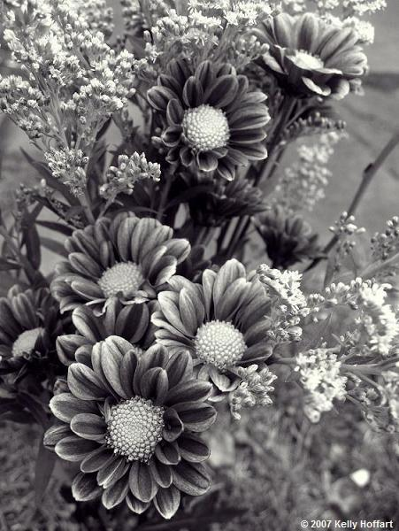 Dahlia and Goldenrod in Monochrome