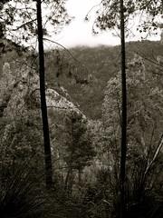Mountian Forest (shaunwilkinson79) Tags: fog tress mountianforest