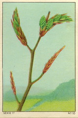 feuilles 10