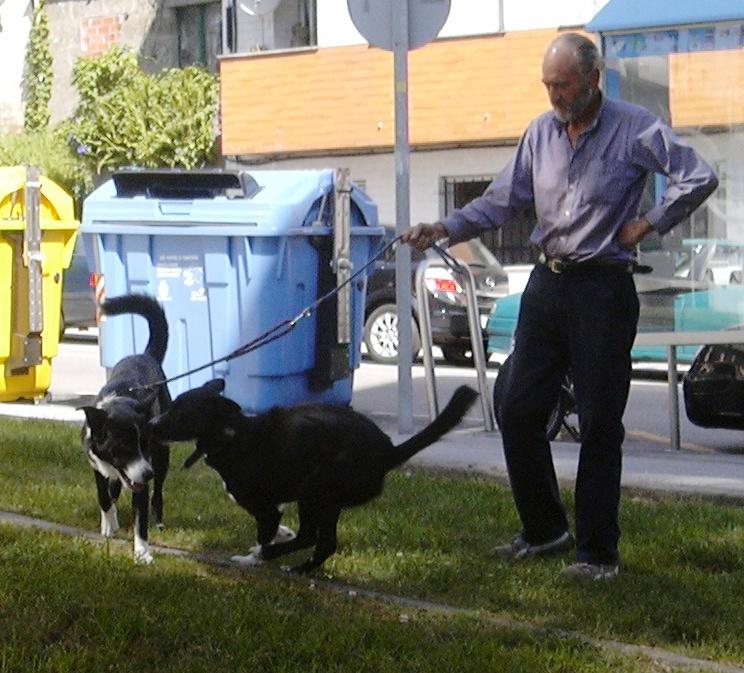 Un tipo y dos perros