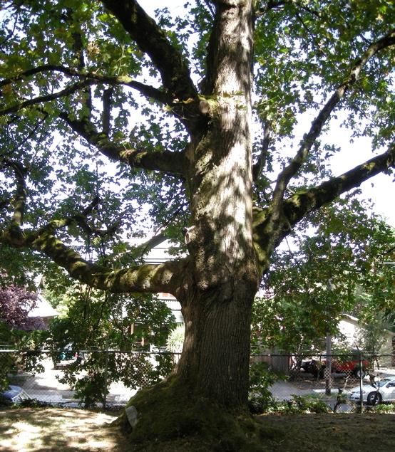 100107_tree_ate_stones_555x635