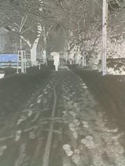 snow blindness (pixelspin) Tags: park schnee snow handy spuren bume weg negativ mensch schirm fussspuren musicinside