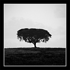I stand alone (nunomurjal) Tags: blackandwhite bw tree portugal field digital rural square landscape countryside oak alone cork squareformat campo lonely alentejo sobreiro chaparro