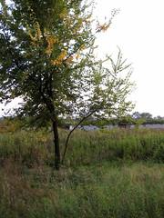 Mirafiori 6-10-2010 14