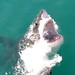 South Africa - Gansbaai (Great White Shark Cage Diving)