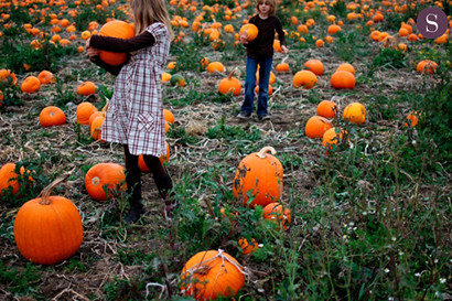 picking pumpkins