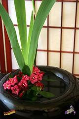 Ikebana Study #13 detail C20070606 007 (fotoproze) Tags: ikebana 100 floralarrangement 50 lise floralart