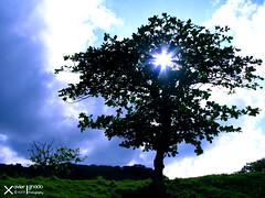 SunTree (Xave Ignacio) Tags: light sun tree green nature landscape flora kim through shining batanes xave