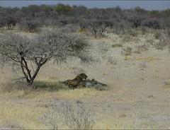 2703 (satinam2) Tags: africa botswana namibia himba