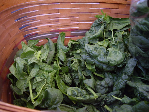 063007spinach