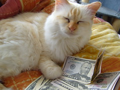 S7000279 (Altwin) Tags: cat dollar
