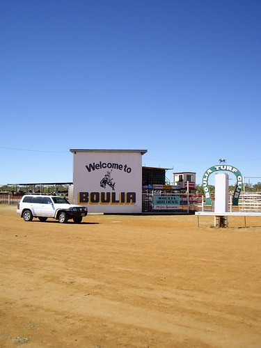 boulia singles Occurs a little north of birdsville and south of boulia despite its restricted   racemes, the rachis up to 5 cm long, rarely single in the axils flowers s-merous.