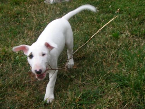 He likes sticks!