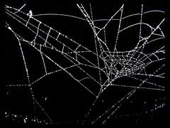ragnatela, spider web (davdenic  in the sky ) Tags: spider web acqua rugiada insetto ragno tela umidit aracnide